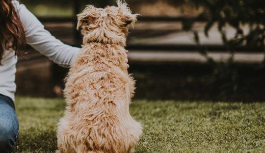 犬の肛門絞りの方法と注意点