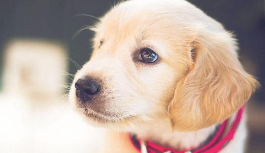 【ドックトレーナー監修】初めての大型犬!小型犬との多頭飼いの注意点とは? ~1