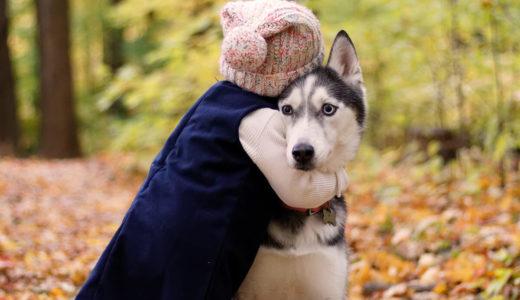 犬が飛びつくのはなぜ?5つの理由と改善方法