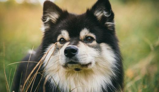 犬のブラッシングの効果とは?