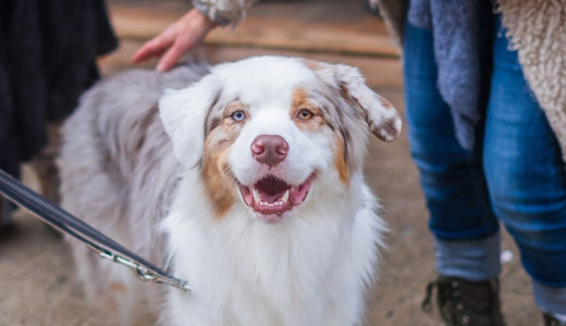 犬のフィラリアとは?症状と予防法