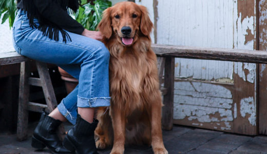 犬のお仕事セラピー犬ってどんな犬?抗うつ症状や免疫力の改善に