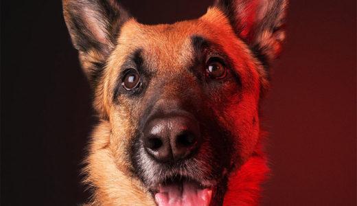 犬の耳のケア方法!トラブルのサインとチェックポイントとは?