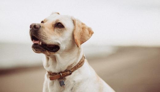 健康のバロメーター!犬のうんちの見分け方
