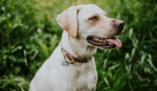 犬が草を食べて嘔吐するのはなぜ?犬が草を食べる理由