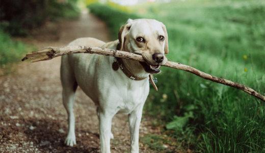 犬にキシリトールを与えてはいけない?!