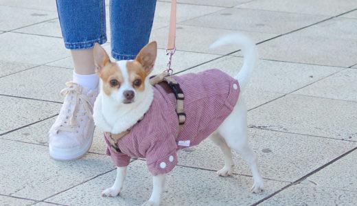 お散歩中に引っ張る犬の対処方法~2.引っ張る犬の対策