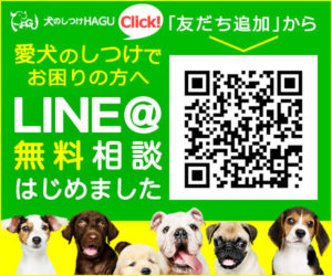 愛犬と一緒に受講するドッグトレーニングから、犬のしつけ、お散歩代行、LINE無料相談、ドッグホテル、ドッグ幼稚園、世田谷を中心に東京23区、神奈川、埼玉へ出張ドッグトレーニングサービスを提供しております。
