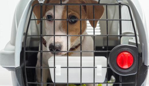犬が安心できる場所クレート!クレートトレーニングの方法とは?