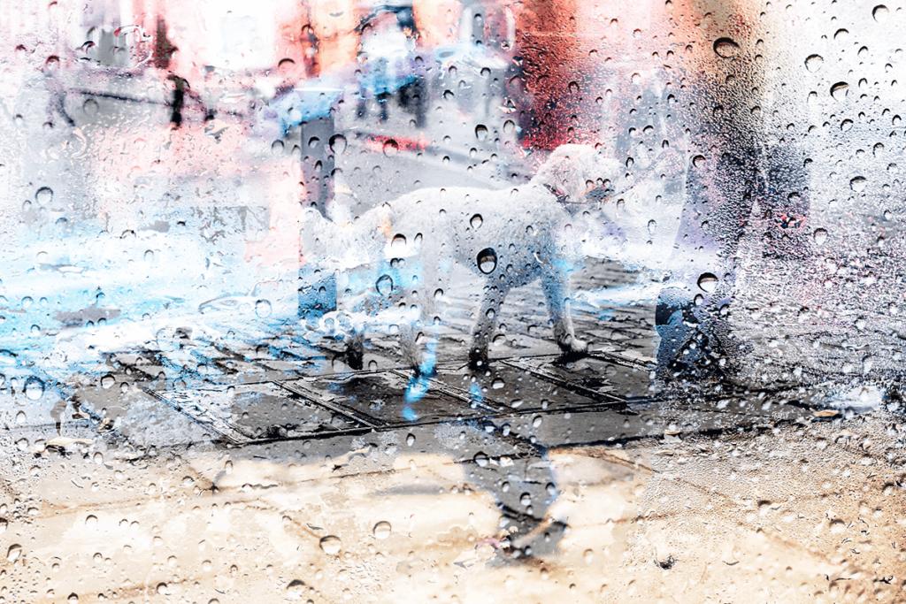 雨の日のお散歩は、必要ありません。普段から室内での運動不足の解消法や室内でまったり過ごせるようトレーニングにお悩みでしたら東京の世田谷区と文京区でドッグトレーニング、犬のしつけハグでご相談ください。無料LINE相談も!