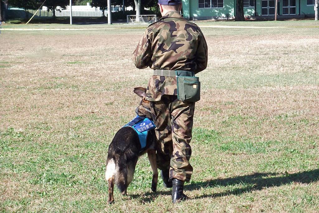 訓練犬とは?世田谷区と文京区で愛犬と一緒に受講するドッグトレーニングから、プロトレーナーによるトイレのしつけ、マナー他、ご自宅までお伺いする出張ドッグトレーニングサービス、お散歩代行、LINE無料相談、ドッグホテル、ドッグ幼稚園、短期間お預かりトレーニング、初回カウンセリングご相談後オリジナルメニューをお作りいたします。犬のしつけハグ