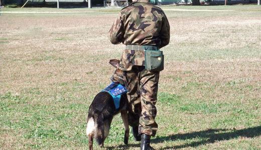 警察犬のお仕事とは?内容と訓練