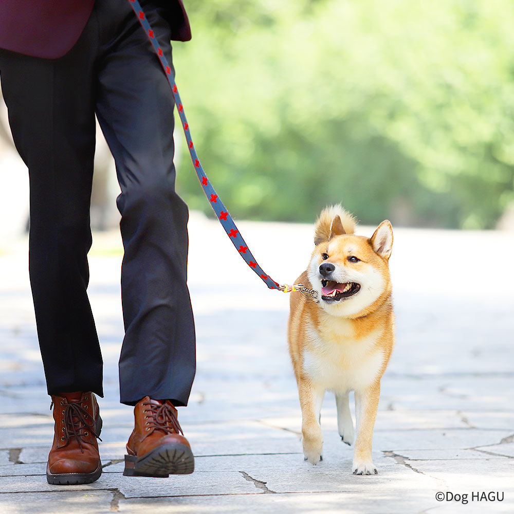 他犬とのふれあい,世田谷区と文京区で愛犬と一緒に受講するドッグトレーニングから、プロトレーナーによるトイレのしつけ、マナー他、ご自宅までお伺いする出張ドッグトレーニングサービス、お散歩代行、LINE無料相談、ドッグホテル、ドッグ幼稚園、短期間お預かりトレーニング、初回カウンセリングご相談後オリジナルメニューをお作りいたします。犬のしつけハグ