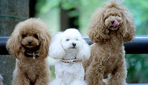 愛犬の熱中症予防レシピ~水分補給
