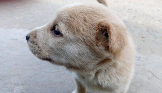 犬にもアレルギーがあるの?症状と予防法。原因は「食べ物」「ノミ」