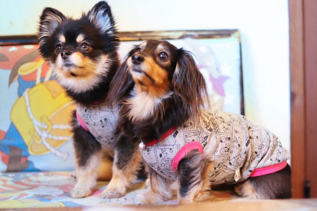 ショッピングモール・アウトレットモールの、愛犬とのおでかけマナーとしつけについてご紹介。世田谷区と文京区で愛犬と一緒に受講するドッグトレーニングから、プロトレーナーによるトイレのしつけ、マナー他、ご自宅までお伺いする出張ドッグトレーニングサービス、お散歩代行、LINE無料相談、ドッグホテル、ドッグ幼稚園、短期間お預かりトレーニング、初回カウンセリングご相談後オリジナルメニューをお作りいたします。犬のしつけハグ