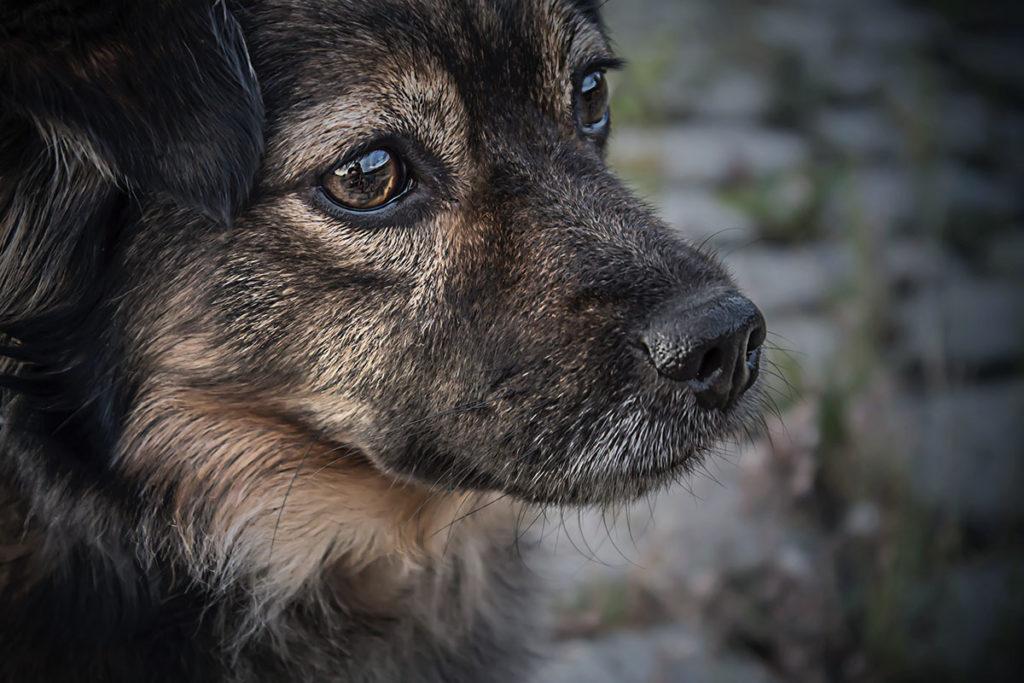 犬に食べさせてはいけないチョコレート中型犬とは?世田谷区と文京区で愛犬と一緒に受講するドッグトレーニングから、プロトレーナーによるトイレのしつけ、マナー他、ご自宅までお伺いする出張ドッグトレーニングサービス、お散歩代行、LINE無料相談、ドッグホテル、ドッグ幼稚園、短期間お預かりトレーニング、初回カウンセリングご相談後オリジナルメニューをお作りいたします。犬のしつけハグ