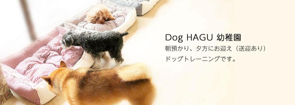 東京の世田谷区と文京区にあるドッグトレーニング犬のしつけ 教室です。犬のしつけの専門家として『スッキリ』(日本テレビ系)で電話インタビュー出演のプロトレーナー川島恵による犬の幼稚園(保育園)預かりしつけサービスです。