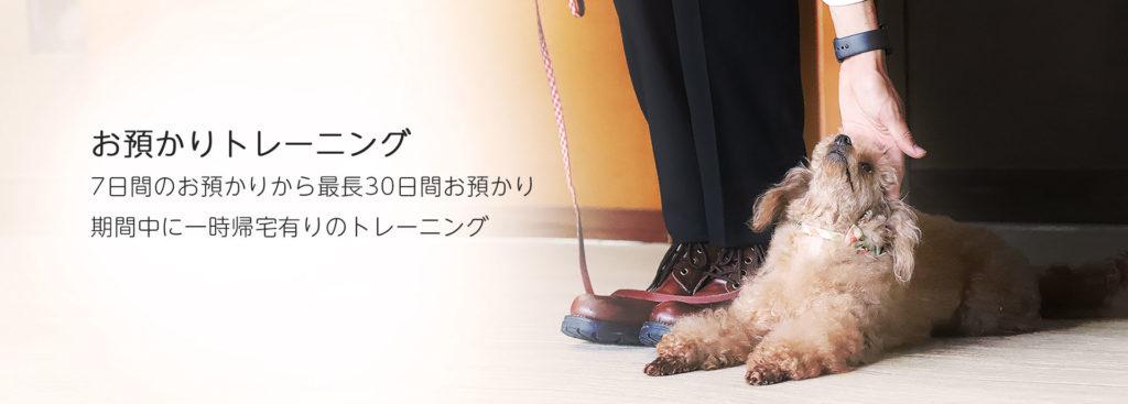 東京の世田谷区と文京区にあるドッグトレーニング犬のしつけ 教室です。プロトレーナーによるトイレのしつけ、噛み癖、吠えでお困りの飼い主様から愛犬をお預かりする7日間から最長30日間のお預かり期間中に一時帰宅有りのトレーニングです。