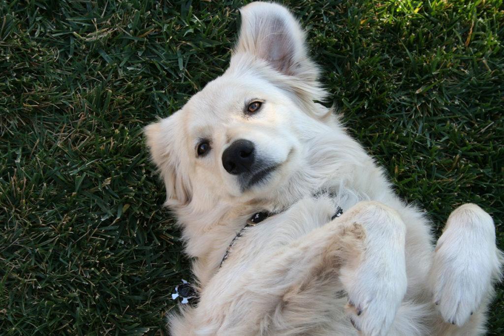 夏に多い犬の皮膚病とは?原因、種類と予防法