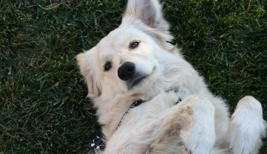 夏に多い犬の皮膚炎の原因と予防法