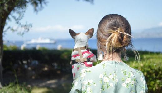 1人暮らしでも飼いやすい犬種は?犬を選ぶ時の3つのポイント