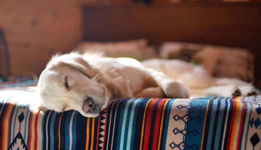 犬も夏太りするの?!原因と予防方法 【夏場は脂肪がついてしまうと余計に暑くなる】食事の見直しダイエット