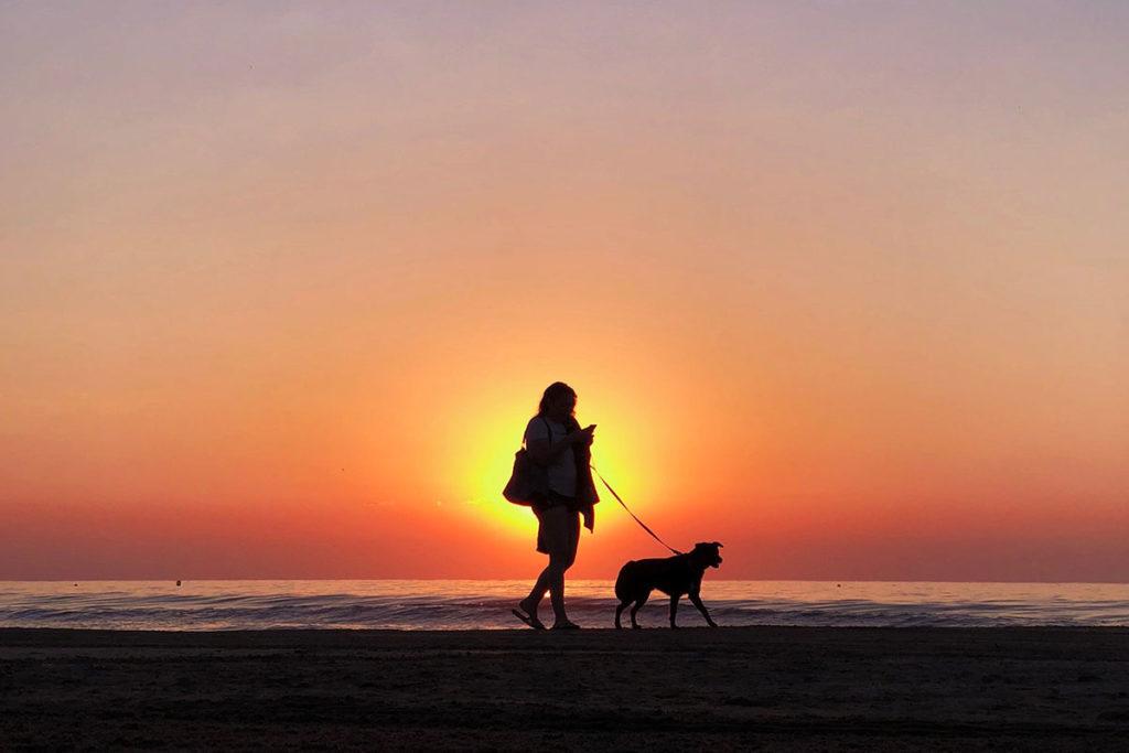 愛犬の夏のお散歩、熱中症応急処置と対策方法は東京の世田谷区と文京区でドッグトレーニング、犬のしつけハグで無料LINE相談