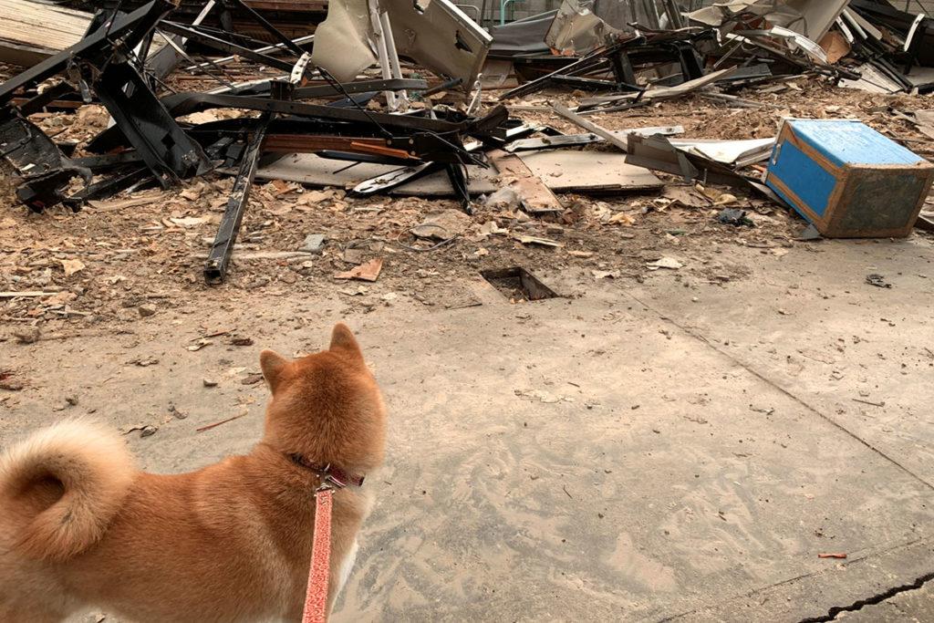 災害時、迷子犬、マイクロチップ装着、義務、データ登録費用が1,000円、更に装着費用が5,000円~6,000円についてのご相談は東京の世田谷区と文京区のプロドッグトレーナー24時間常駐の犬のしつけハグまで