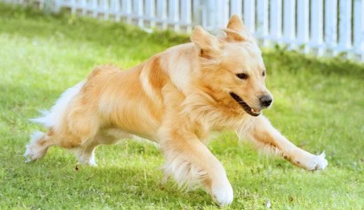【初心者】犬ドッグランで絶対に守るべき【マナー】5つのルール