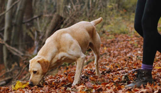 要注意!犬に危険な秋の植物