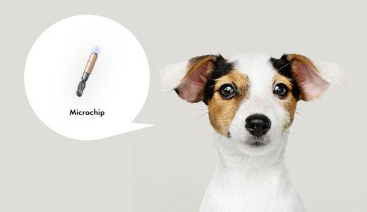 犬のマイクロチップって何?