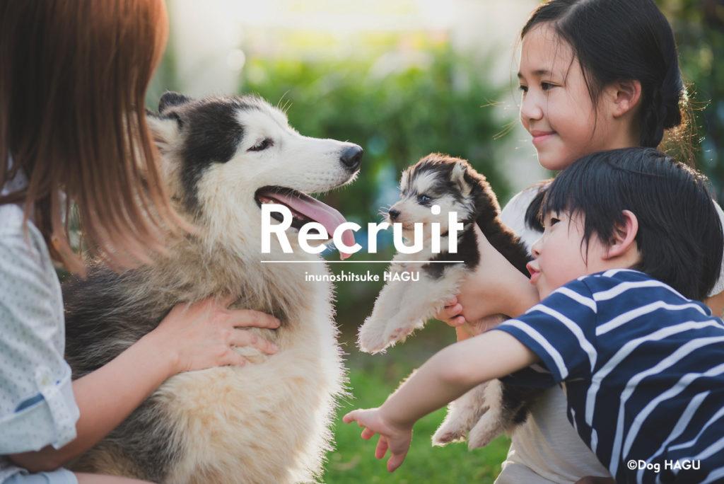 採用情報・インターンシップの募集のお知らせ ドッグトレーニング 犬のしつけ教室 トイレトレーニング 噛み癖 吠えのしつけは犬のしつけハグ