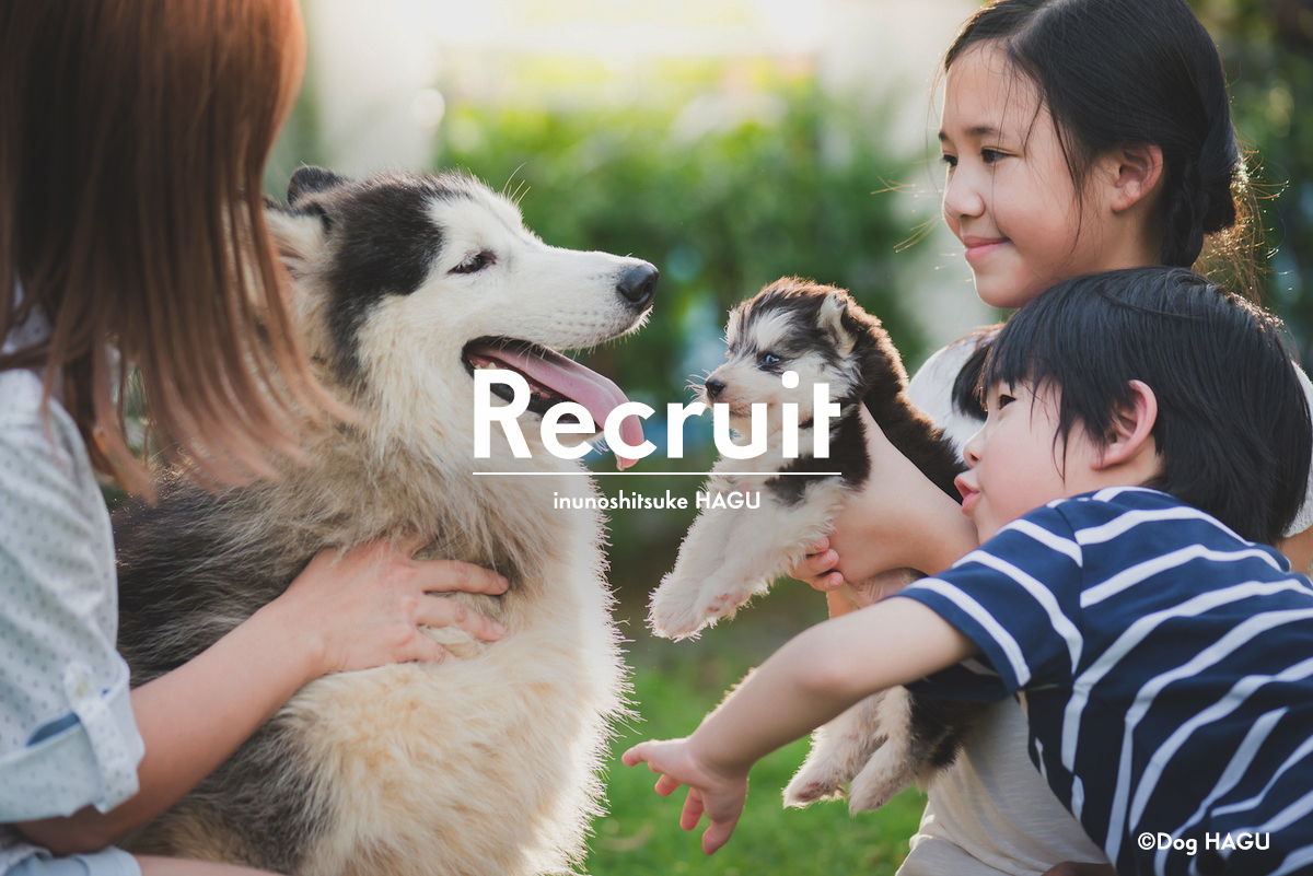犬のしつけ 世田谷 オープニングスタッフ募集 ドッグトレーニング 犬のしつけ教室 ドッグスクール