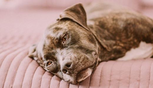 犬の急死は珍しくない?!5つの理由と予防法