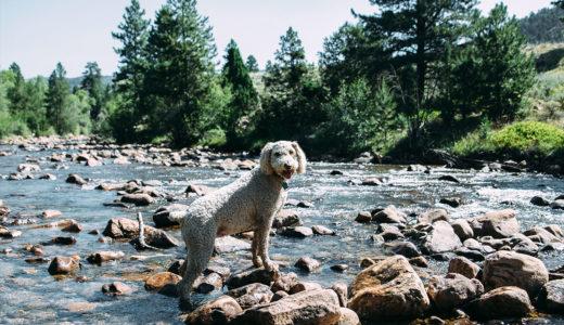 犬との旅行で気を付けるべき4つの事