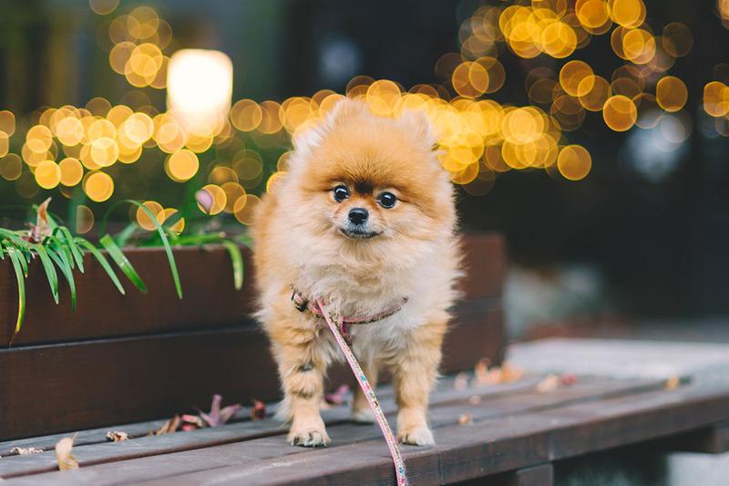 犬の知能は?どの犬種でも200位の言葉を理解できるようになります