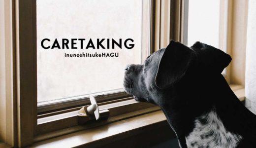 一人暮らしで犬を飼うための必須条件!お留守番問題の解決方法