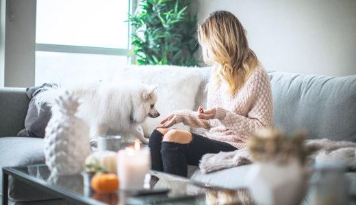 一人暮らしで犬が飼いたい人に知ってもらいたい6つの事