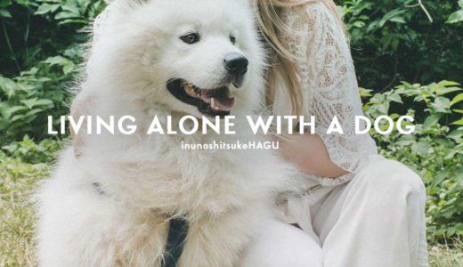 一人暮らしで犬を飼う!今までの生活とどう変わる?