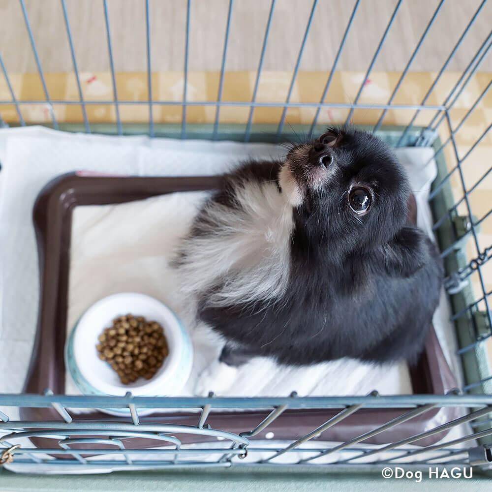 吠え、噛む癖、トイレトレーニングは世田谷と文京区にある犬のしつけハグのドッグホテルお食事シーン