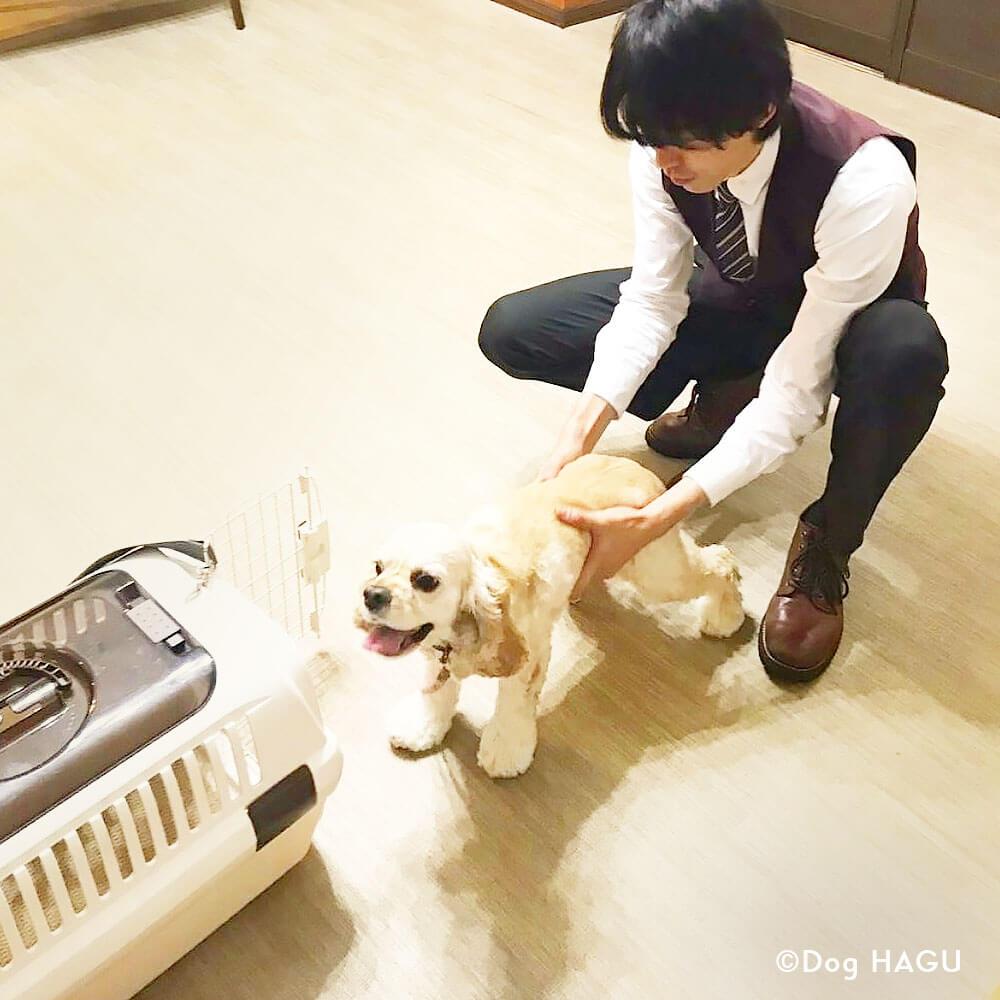 吠え、噛む癖、トイレトレーニングは世田谷と文京区にある犬のしつけハグのクレートトレーニングシーン