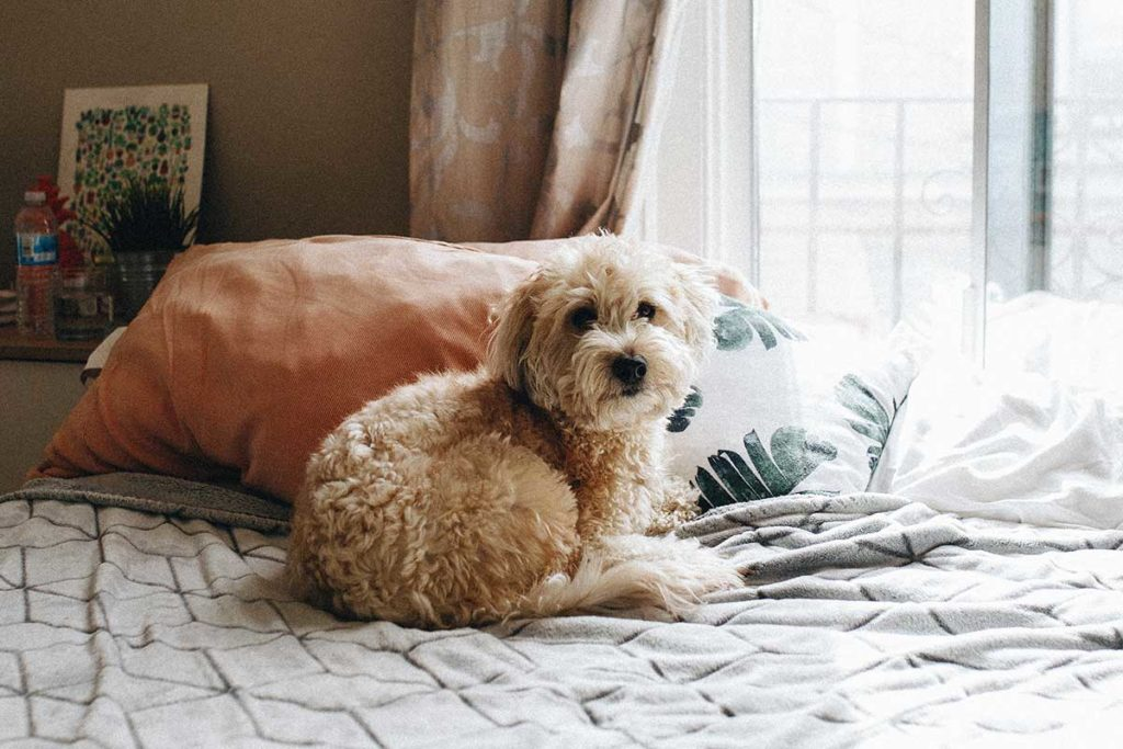 一人暮らしで犬を飼いたい人が知っておきたい!犬と快適に暮らす物件を探すコツ