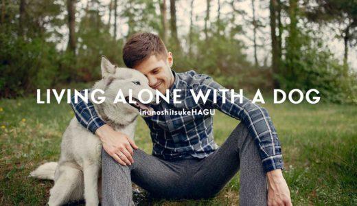 一人暮らしでも犬は飼える!費用や時間以外に犬を飼うために必要なモノとは?