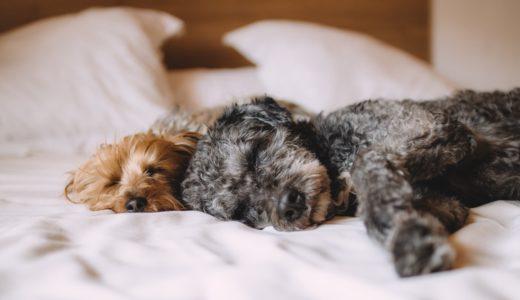犬アレルギー症状が出にくい犬種、出やすい犬種