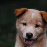 犬の行動で分かる心理状態や健康上の問題と問題行動8つ【まとめ】カナーン・ドッグ