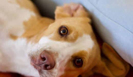 犬の健康状態をチェック!日常的、定期的に確認すべきポイントとは?