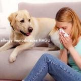 犬アレルギーの治療薬と犬アレルギー飼い主さんのための日常生活の注意点、対処方法