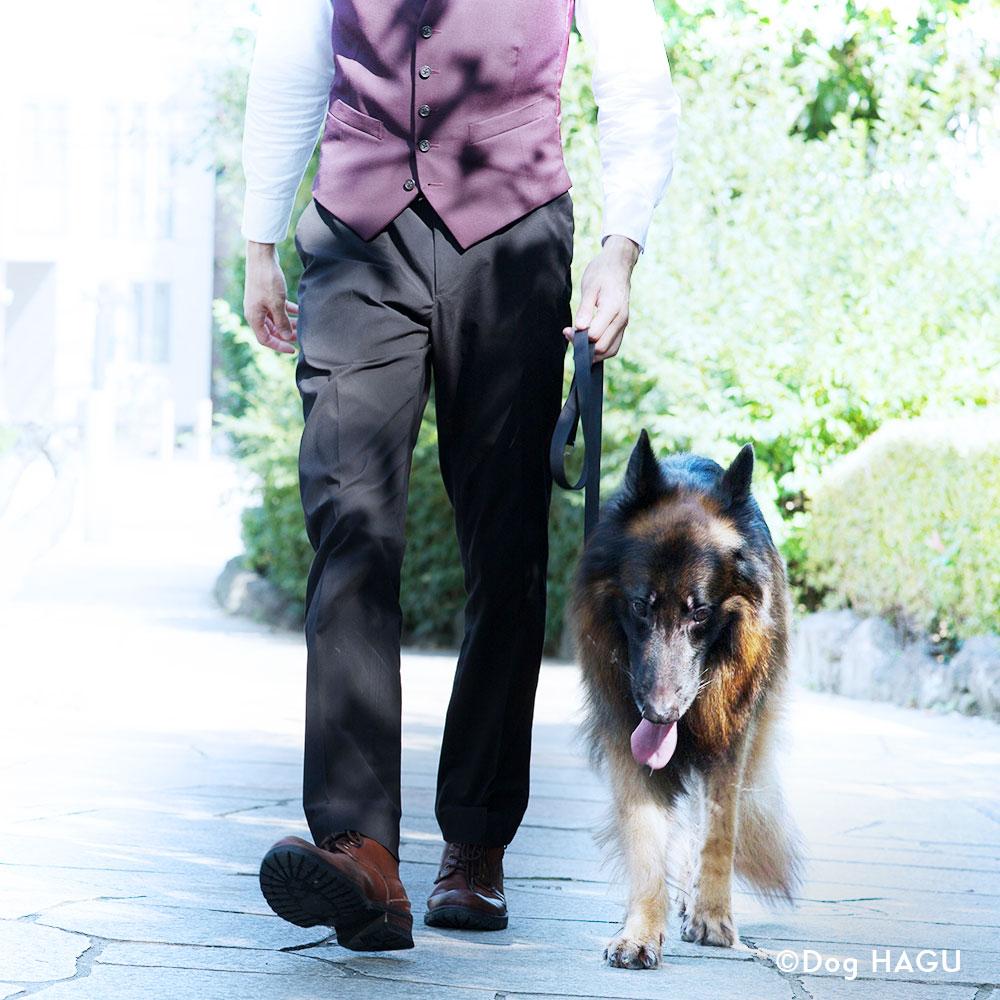 吠え、噛む癖、トイレトレーニングは世田谷と文京区にある犬のしつけハグのお散歩トレーニング