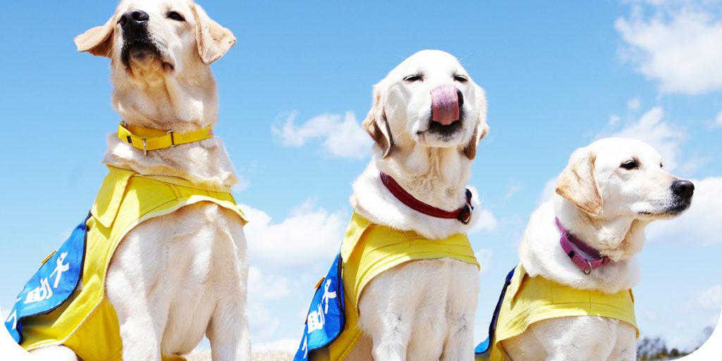 補助犬の種類とお仕事内容 5月22日は補助犬の日 日本介助犬協会